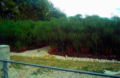 Sistemas Wetland (Humedales Artificiales)